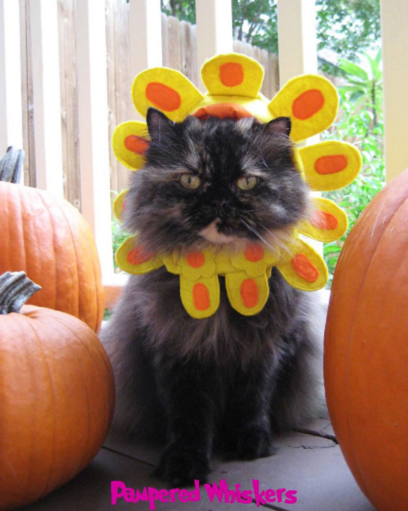 Cat Flower Costume