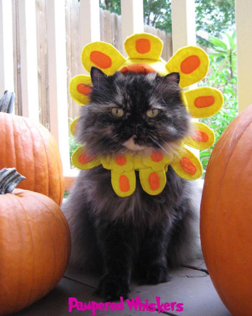 Cat Flower Costume