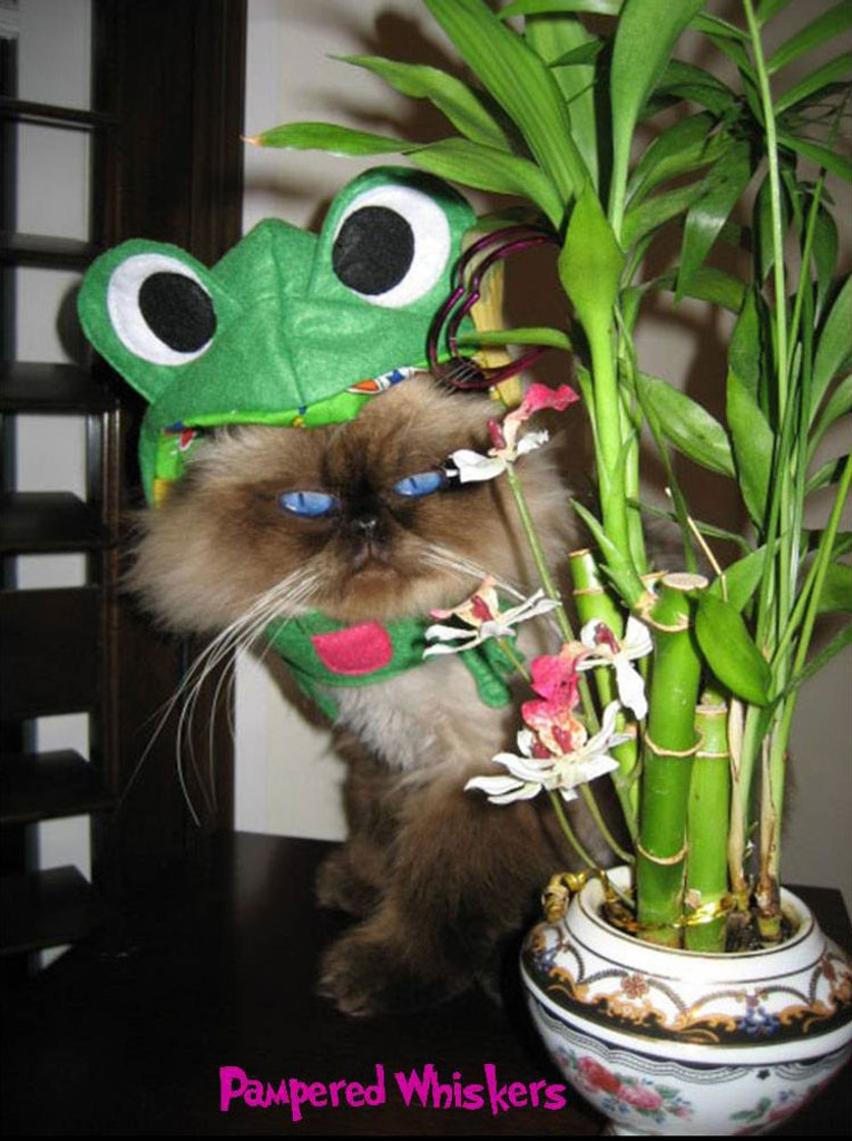 frog hat for cats