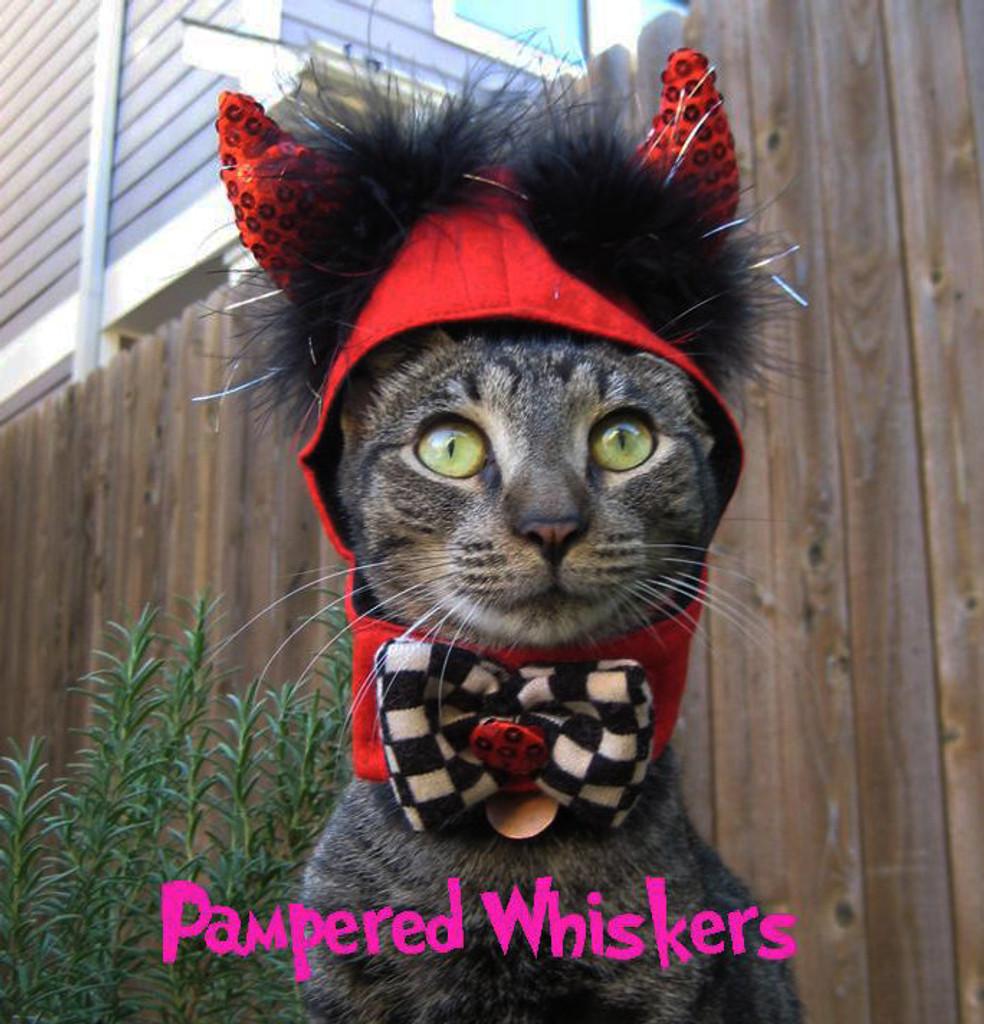 Cat Devil Costume