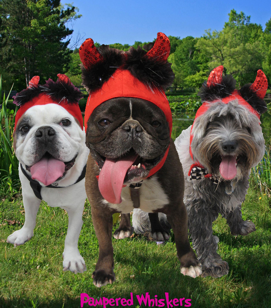 Dog Devil Hat