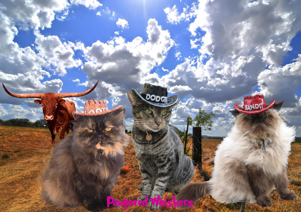 personalized cowboy hat for cats and dogs