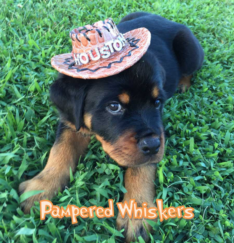 Tan Cowboy Hat for dogs