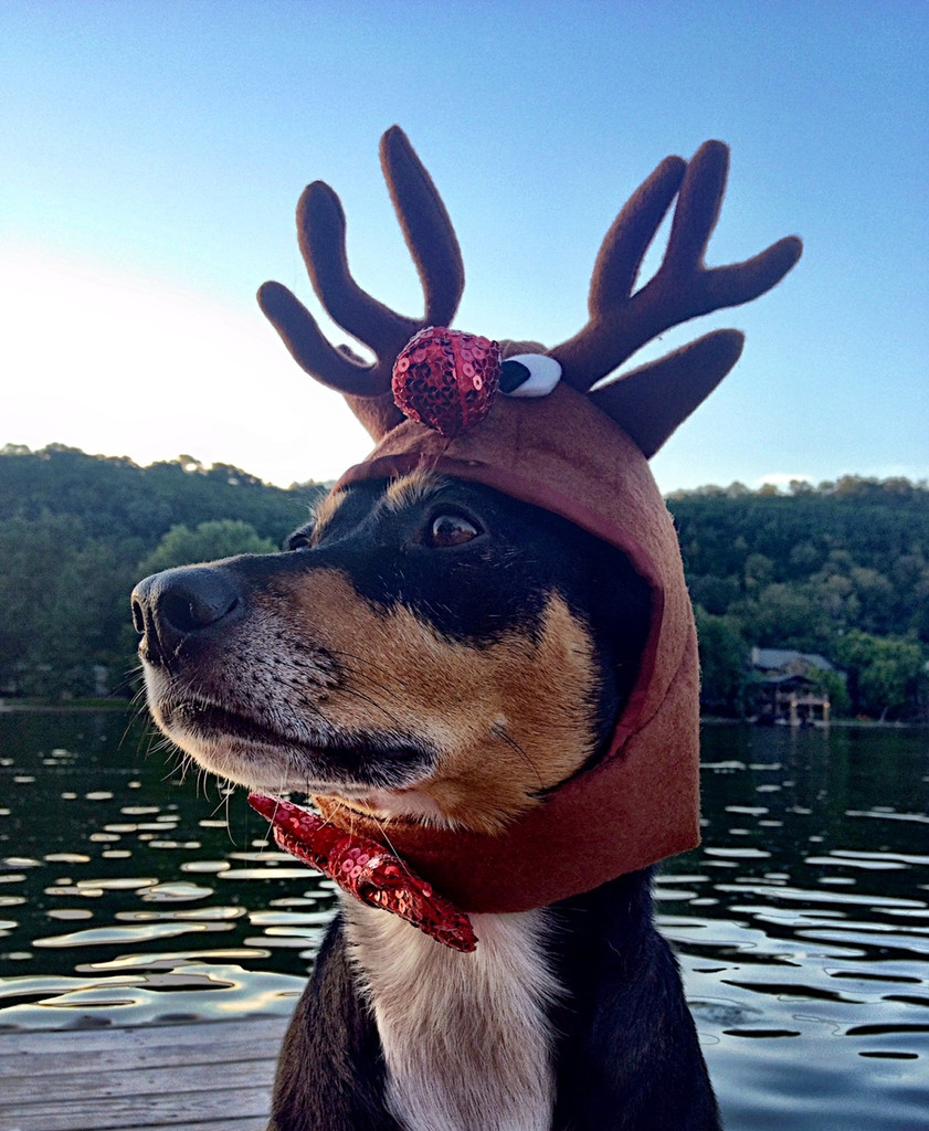 Reindeer antlers for dogs.