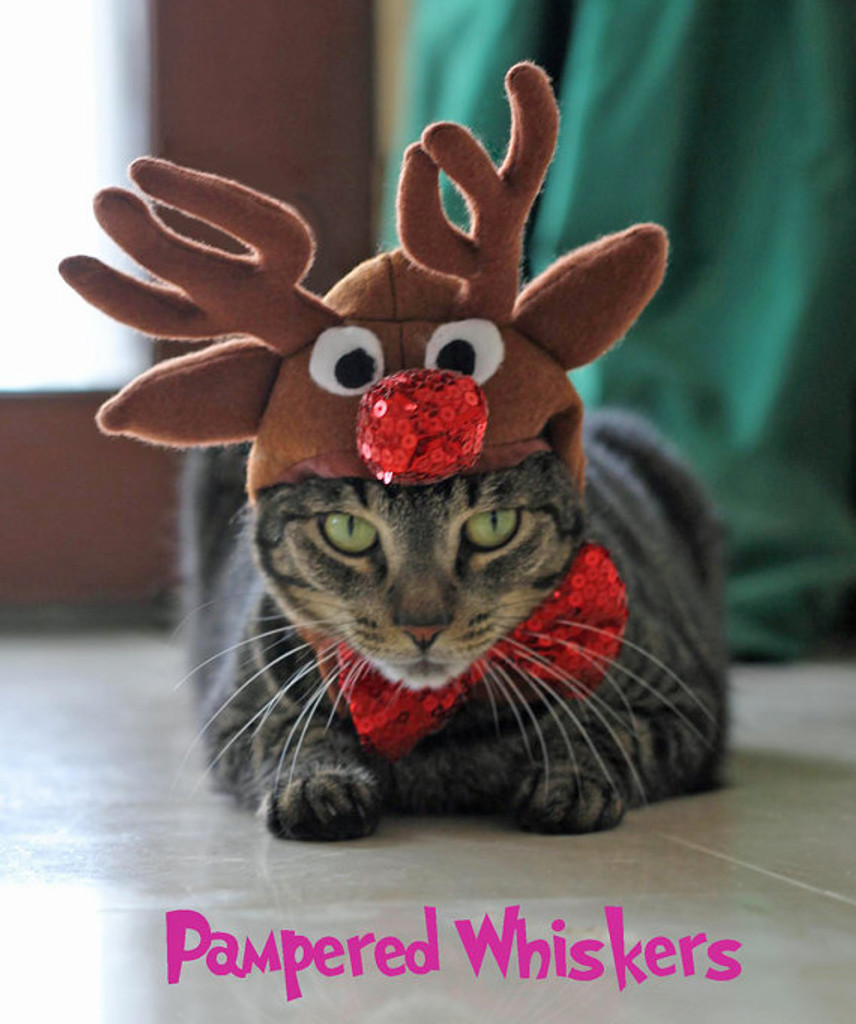 Cat reindeer hat