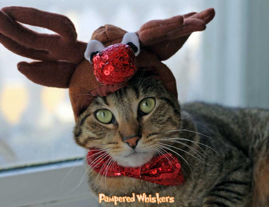 cat reindeer antlers