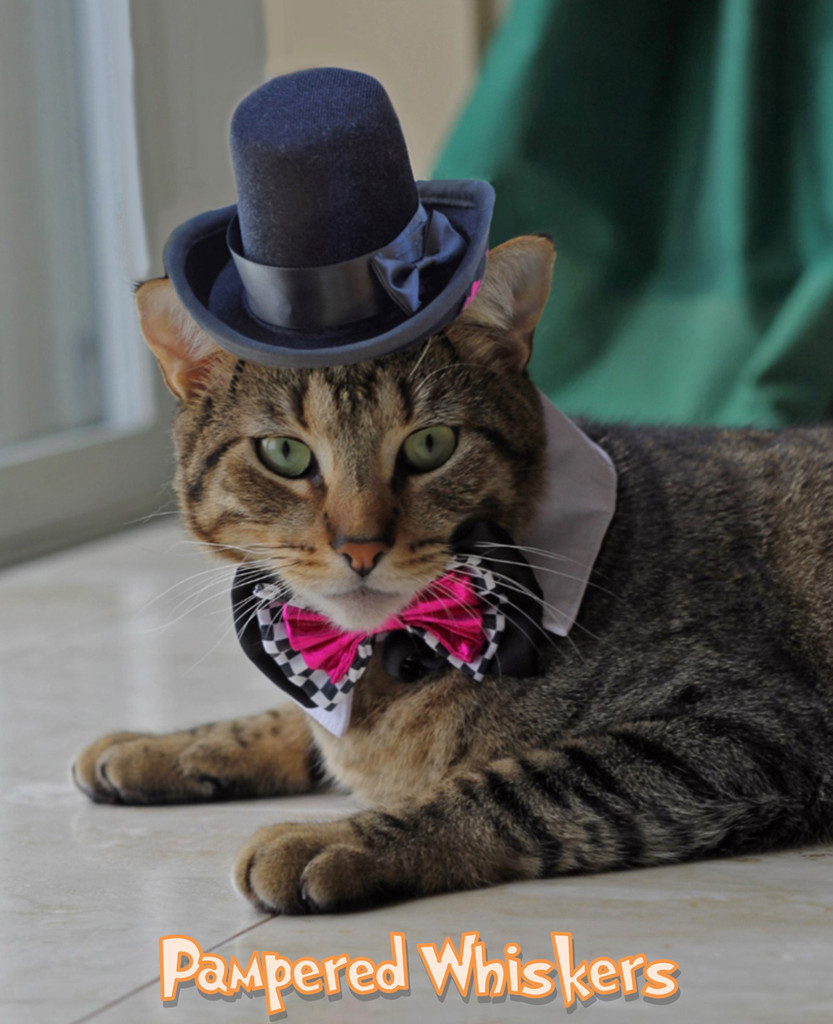Cat Top Hat and Bowtie