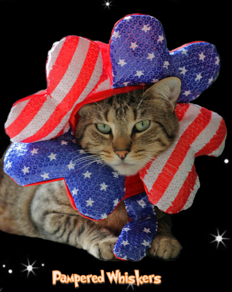 Cat 4th of July hat - Uncle Sam hat for cats