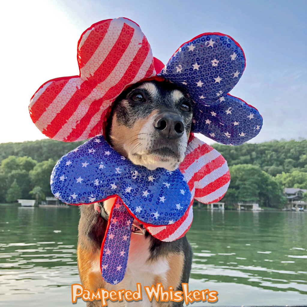 Dog 4th of July hat