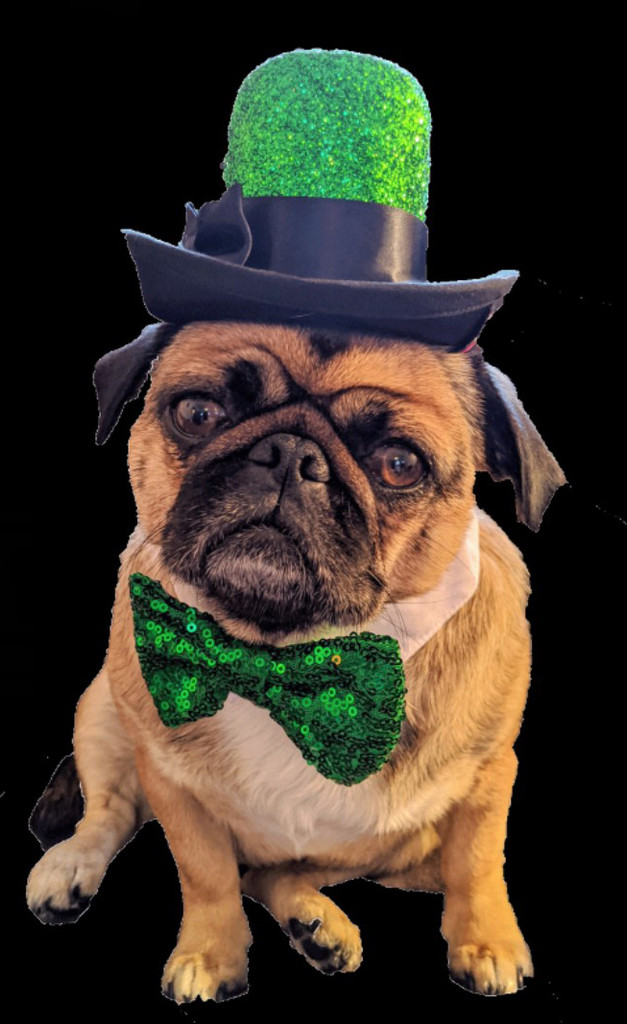 The Glitzy Aristocrat Top Hat for dogs and cats in holiday green