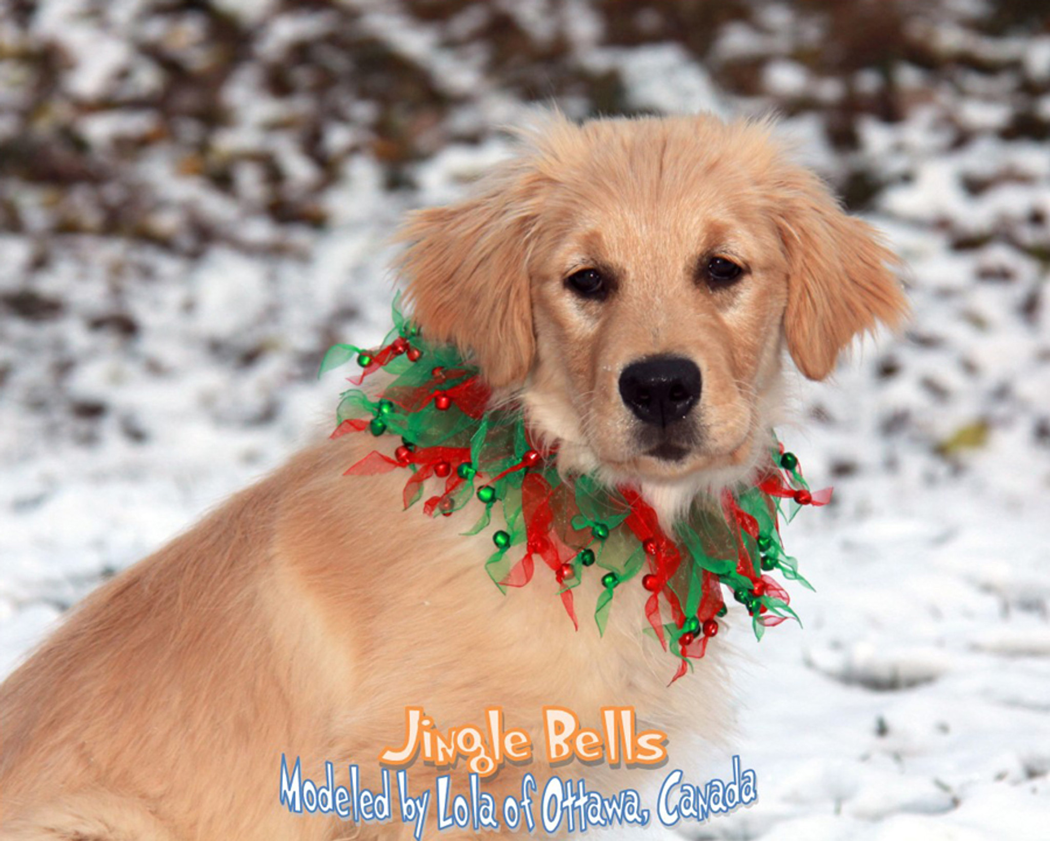 Jingle Bells Party Collar Pampered Whiskers
