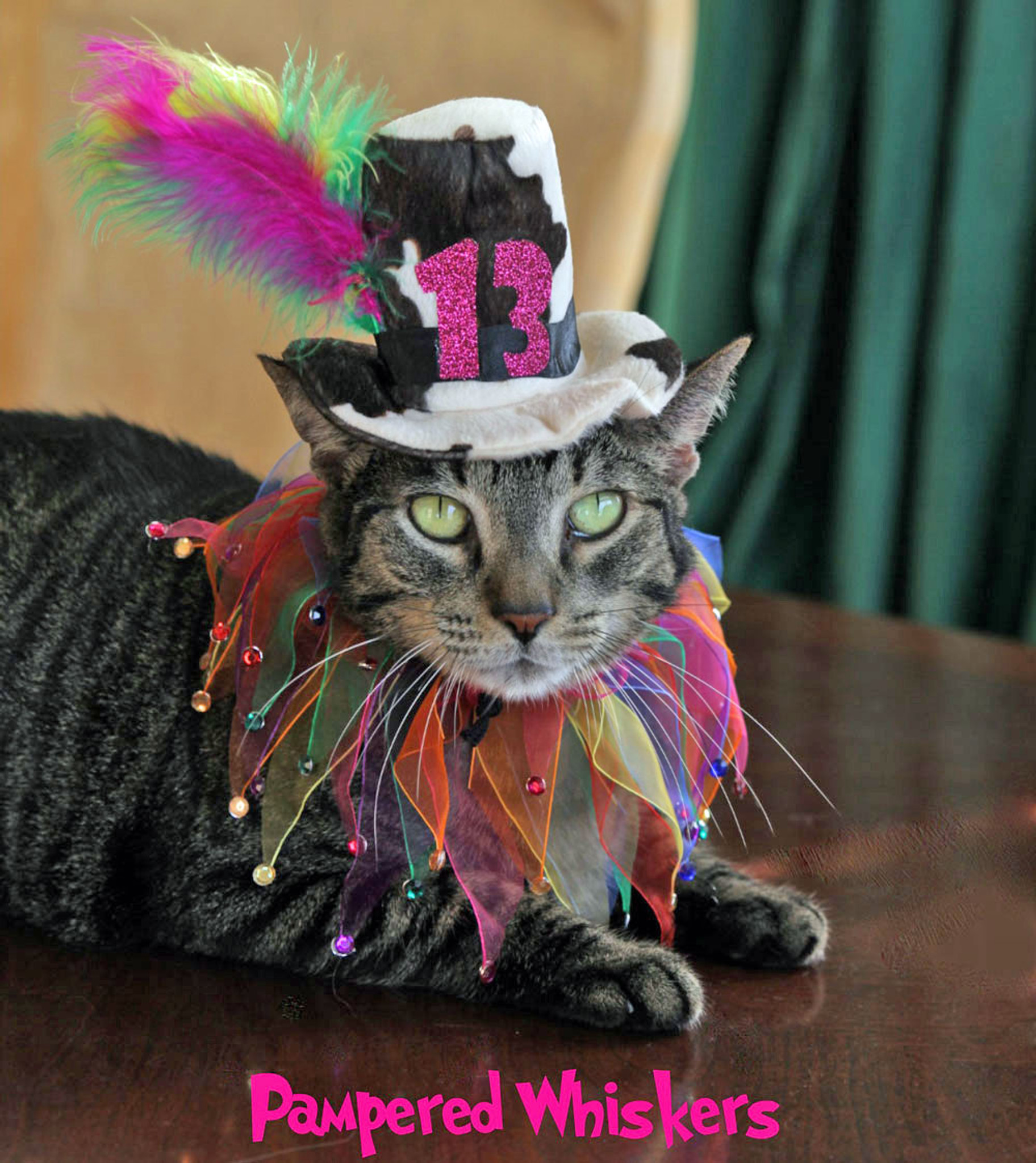 Birthday Hat For Cats And Dogs