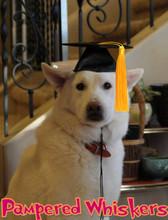 Graduation cap for large dog