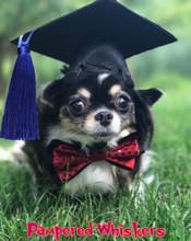 Dog graduation cap with blue tassel