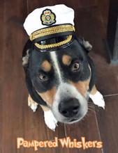 Captain hat for dog
