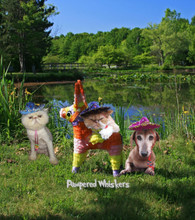 Pampered Whiskers sombrero for dogs and cats