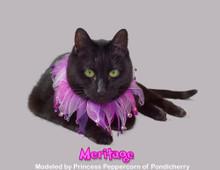 Meritage party collar