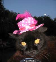 In the pink! polka dot hat for cats