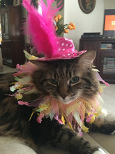 Easter Hat for Cat with Easter Party Collar