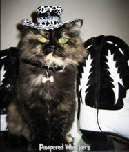 Midnight Cowboy All Pimped Up Cowboy hat for cats and dogs
