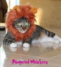 cat lion mane