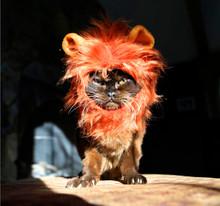 lion mane for cat