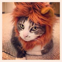 cat lion costume