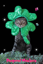 The Lucky One Shamrock hat for cats and dogs