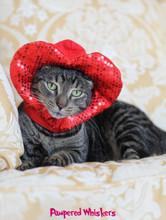 Valentine Day cat hat