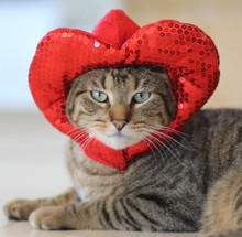 Heart Hat for Cat