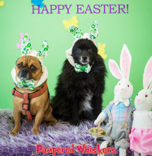 Easter Rabbit Costume for dogs and cats