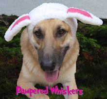 dog sheep costume