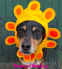 Dog Sunflower Hat