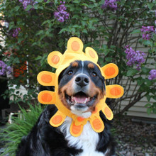 Sunflower Costume for dog