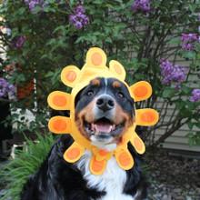 Sunflower Costume for dog