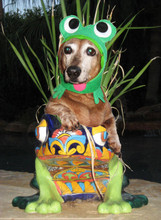 Frog costume for dogs and cats
