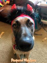 Dog Devil Costume