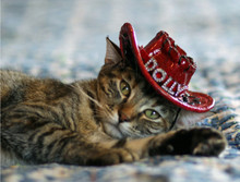 Cat Cowboy hat