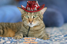 Cowboy hat for dogs and cats