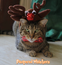Cat Reindeer Costume
