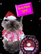 Santa hat for cat