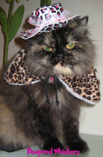leopard print hat for cats and small dogs.