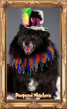 Mad Hatter Dog Birthday Hat