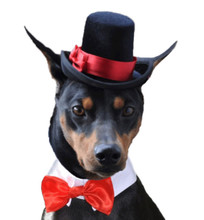 Dog Top Hat and bow tie