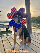 Dog 4th of July Costume