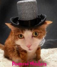 Cat Top Hat - Glitzy Aristocrat in Silver