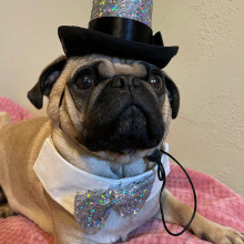 Holographic silver stars and moons Glitzy Aristocrat Top Hat for dogs and cats