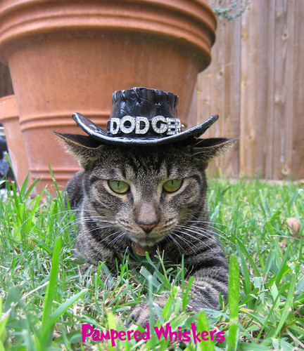 Dog Cat Birthday Hat Personalized Midnight Cowboy