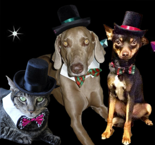 Top Hat for dogs and cats - The Aristocrat b9bf5774add5