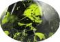 HDHH-1640-FB Corona Jane FULL BRIM Hardhats ~ Graphic Detail